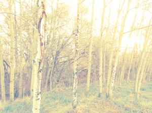 Artsy Photo of trees because we're from BC