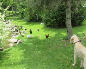 Dexter and the chicken