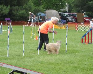 Dog obstacle