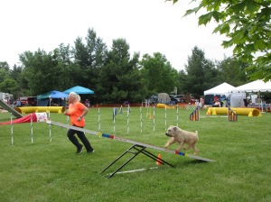 Dog Show Pics kingston 031