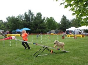 Dog Show Pics kingston 031