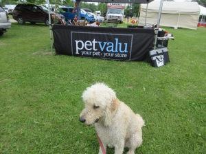 Dog Show Pics kingston 140