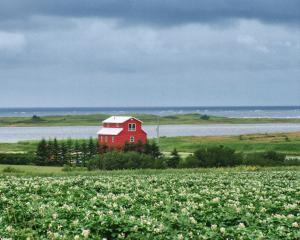 Red house and potato field
