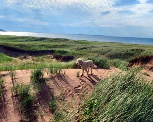 Dog on the dunes