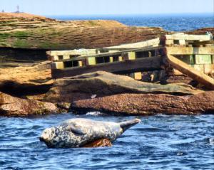 Gigantic seal