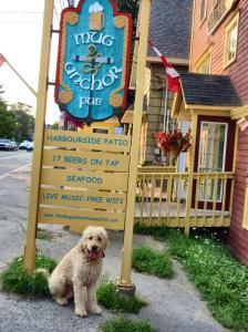 Dog at the Pub