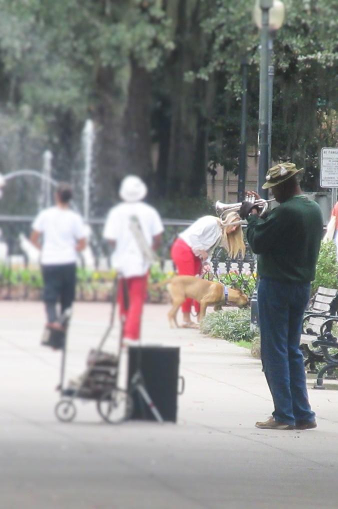 Lone trumpet savannah
